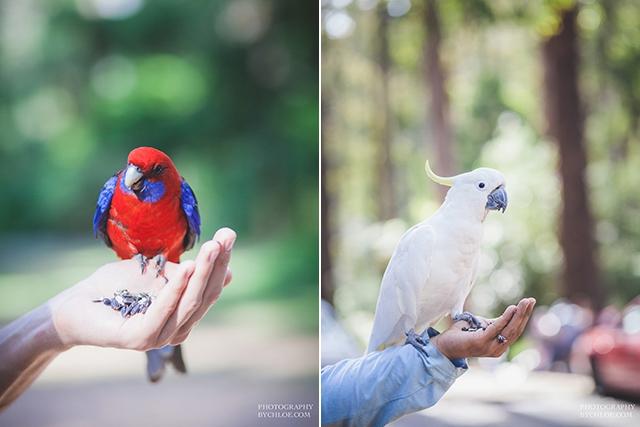 Seance couple naturelle session engagement - photographe By Chloe - La Fiancee du Panda blog mariage-42