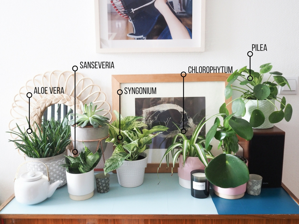 Plantes depolluantes lesquelles mettre chez soi l La Fiancee du Panda blog deco et lifestyle