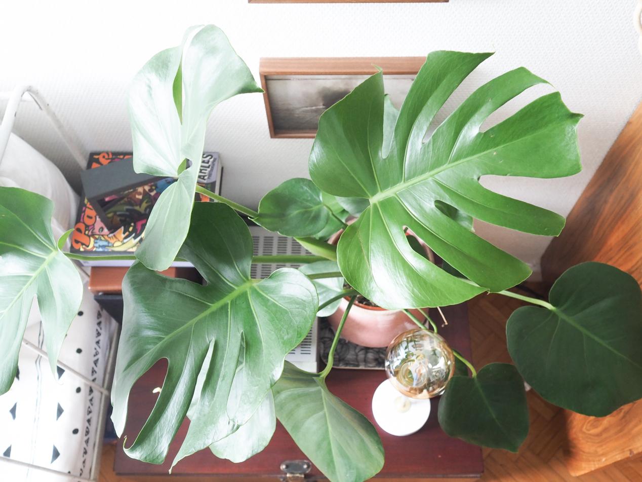 Plantes interieur depolluantes detoxifiantes guide Truffaut domus l La Fiancee du Panda blog deco et lifestyle-7203449
