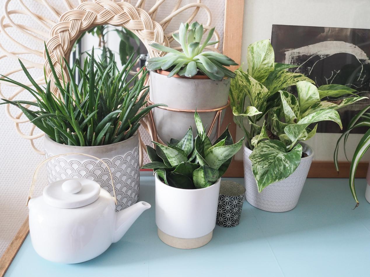 Plantes interieur depolluantes detoxifiantes guide Truffaut domus l La Fiancee du Panda blog deco et lifestyle-7203450