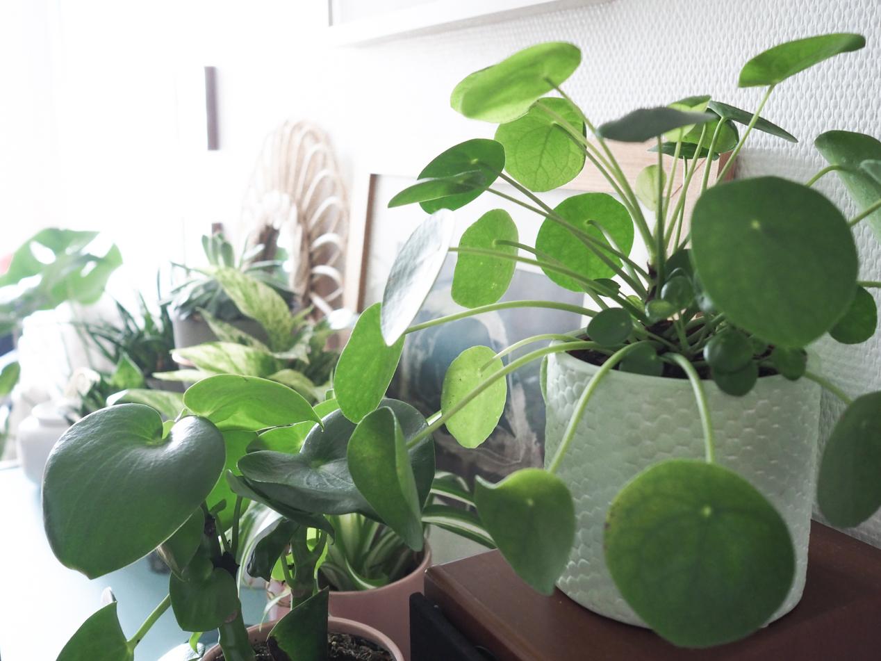 Plantes interieur depolluantes detoxifiantes guide Truffaut domus l La Fiancee du Panda blog deco et lifestyle-7203459