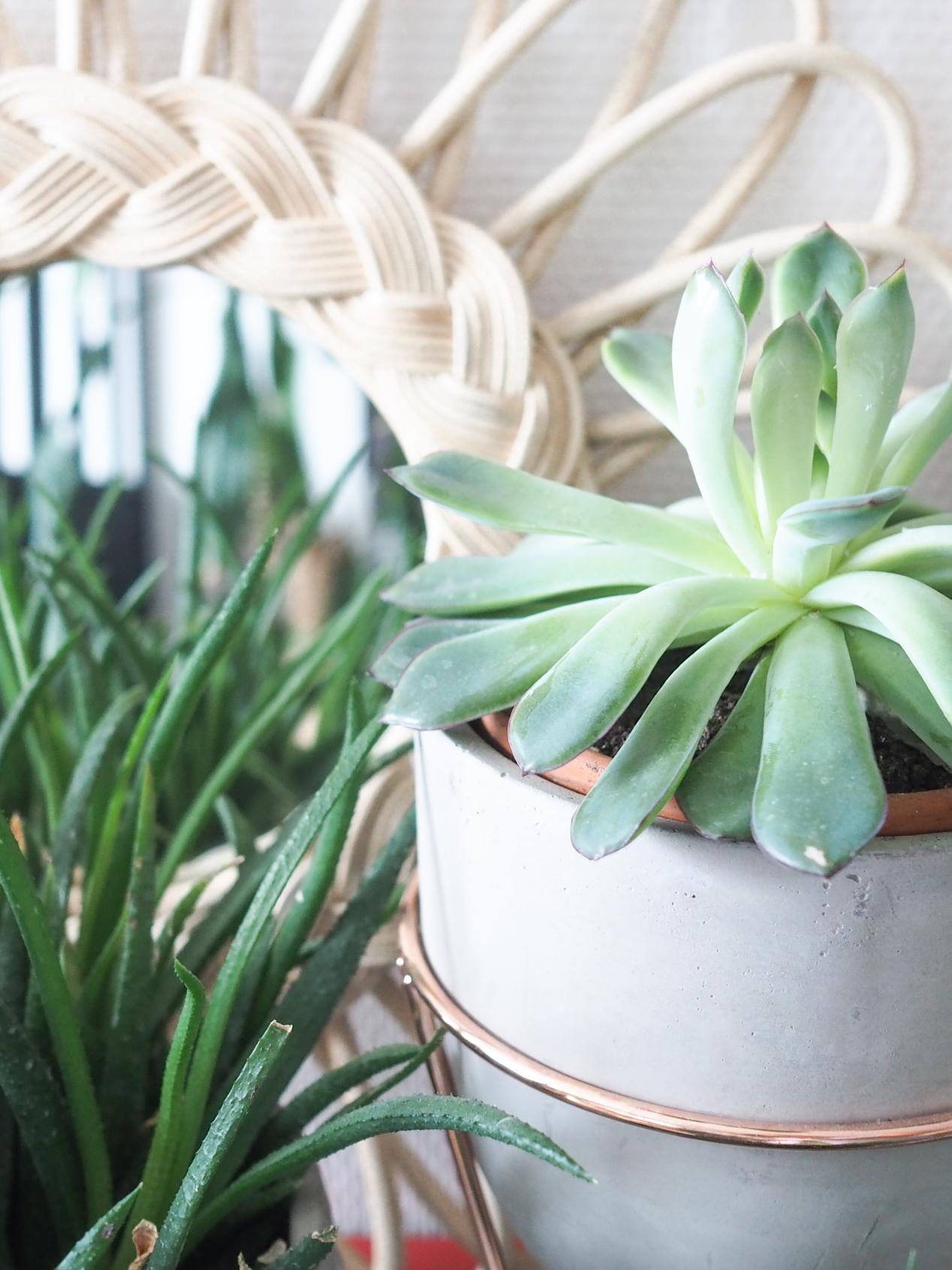 Plantes interieur depolluantes detoxifiantes guide Truffaut domus l La Fiancee du Panda blog deco et lifestyle-7203461