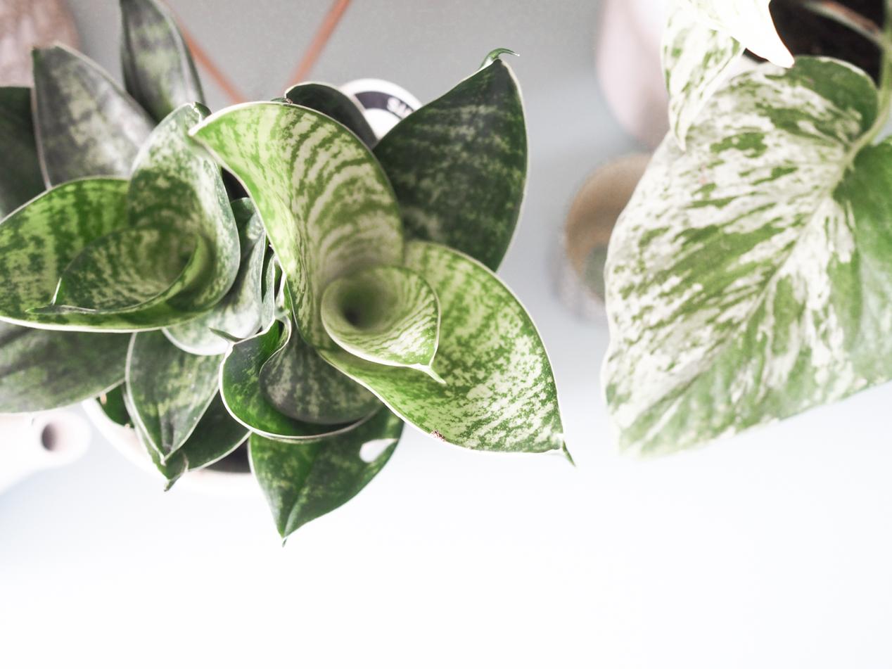 Plantes interieur depolluantes detoxifiantes guide Truffaut domus l La Fiancee du Panda blog deco et lifestyle-7203462