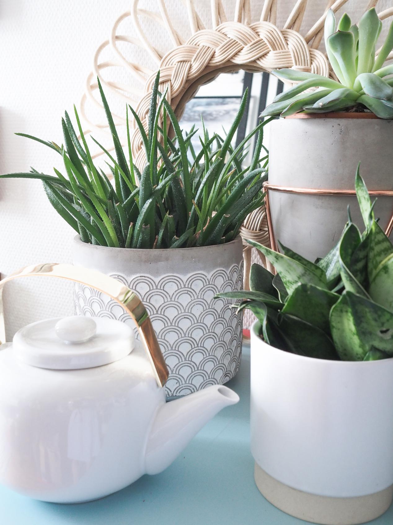 Plantes interieur depolluantes detoxifiantes guide Truffaut domus l La Fiancee du Panda blog deco et lifestyle-7203464