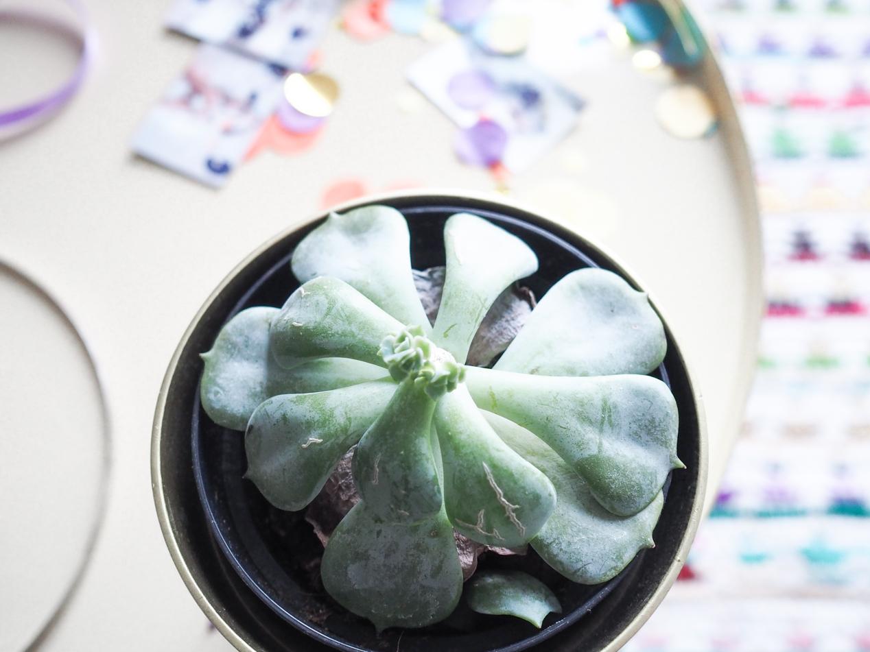 Plantes interieur depolluantes detoxifiantes guide Truffaut domus l La Fiancee du Panda blog deco et lifestyle-7203468