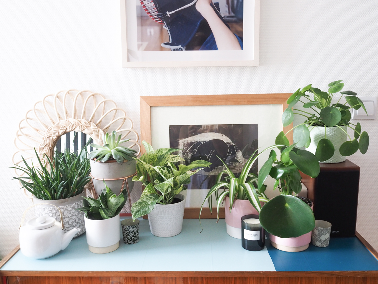 Plantes d polluantes d 39 int rieur mode d 39 emploi - Plantes depolluantes d interieur ...